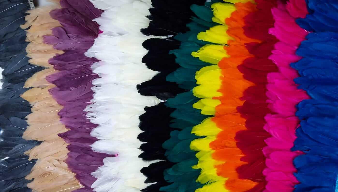 מבחר ענק של נוצות בצבעים מרהיבים